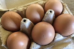 Eggs from our nieghbor